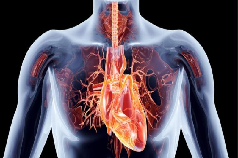 ترمیم قلب پس از حمله قلبی امکان پذیر شد