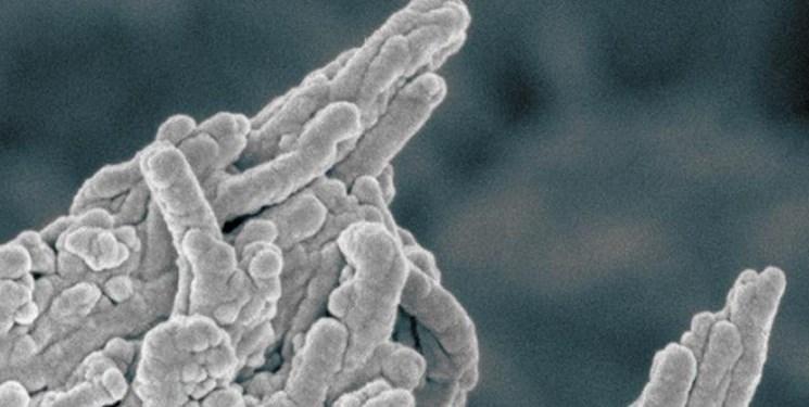 درمان جدید تصلب شرایین با آنتی بیوتیک معمولی