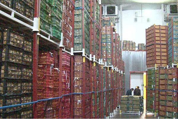 صدور پروانه ساخت برای سردخانه های خالی ، 95 درصد سیب فراوری استان بدون مشتری