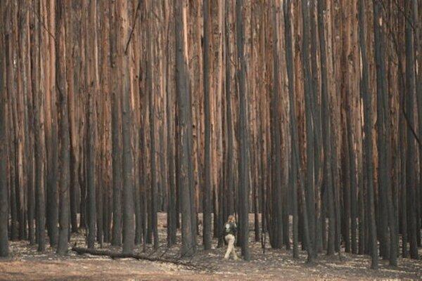 افزایش دما در استرالیا ، آتش سوزی های جنگلی تجدید می گردد؟