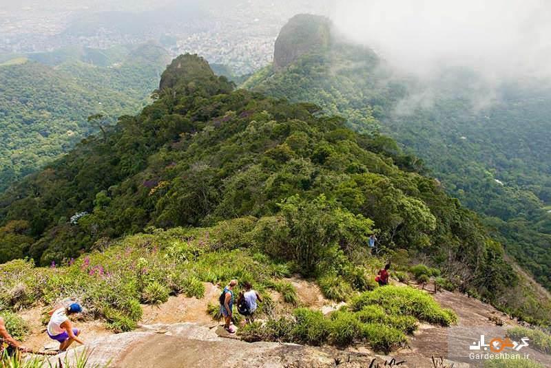 پارک ملی تیجوکا برزیل؛بزرگترین منطقه جنگلی - مسکونی دنیا، عکس
