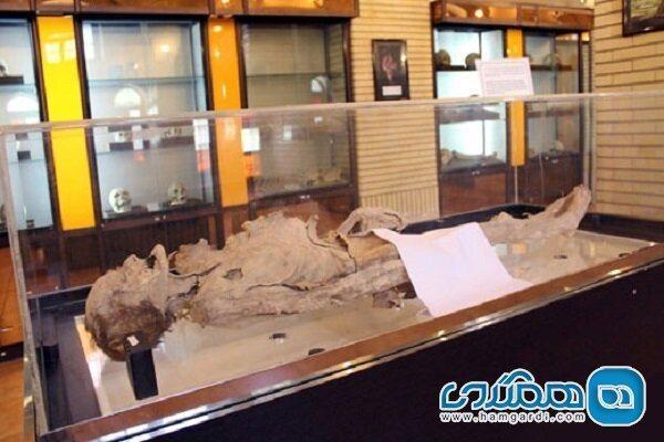 از اسکلت مومیایی طبیعی زن 65 ساله نمونه برداری شد